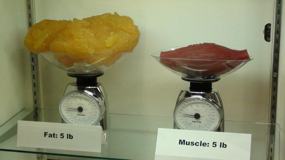 FatVSMuscle